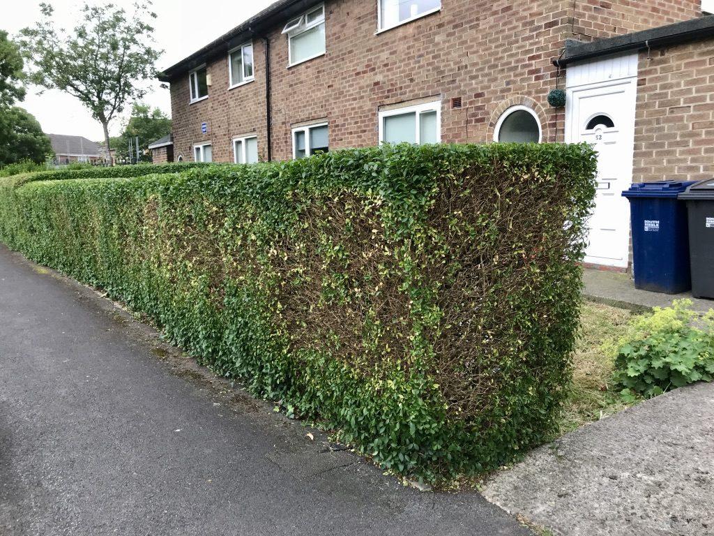 Finished Hedge