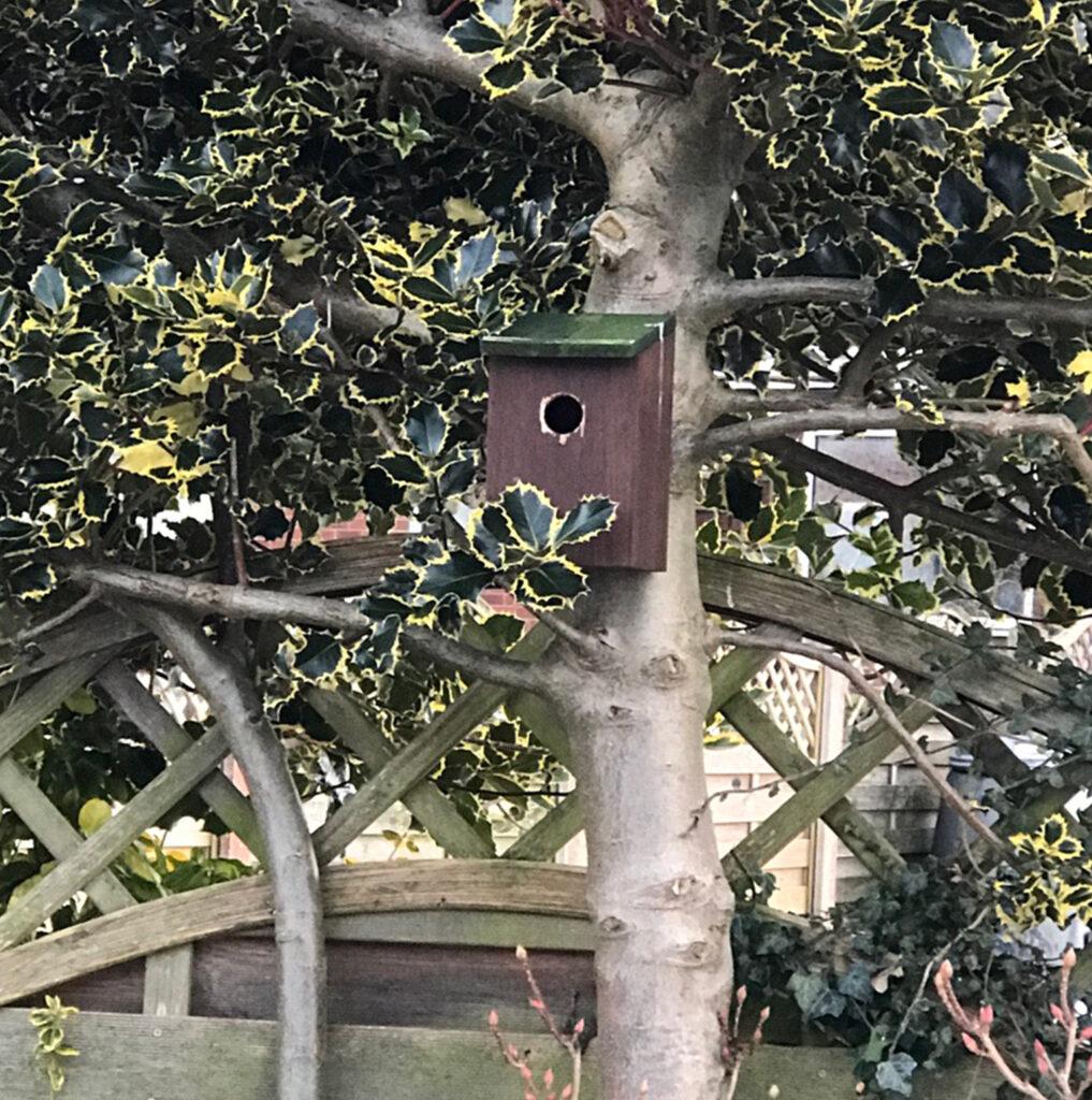 Bird Box CGS
