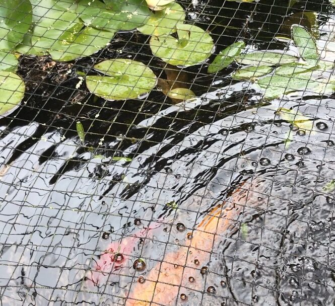 Pond Removal Services