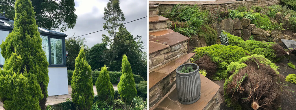 Small tree Ivy Removal