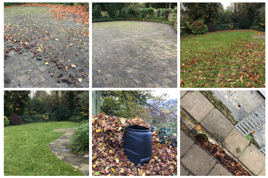Fallen leaf removal